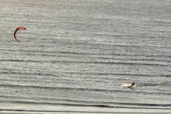 Сиротливое kitesurfer едет море в Jericoacoara, малый рыбацкий поселок обнаруженный местонахождение около 300 km к западу от Форт Стоковые Изображения RF