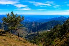 Сиротливые деревья Стоковая Фотография RF