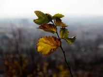 Сиротливые желтые лист осени на серой предпосылке Стоковые Изображения