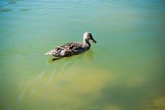 Сиротливые жизни птицы в окружающей среде Стоковые Изображения RF