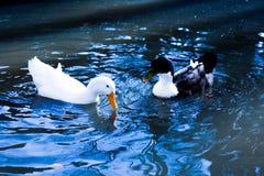 Сиротливые жизни птицы в окружающей среде Стоковая Фотография RF