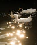 Сиротливые жизни птицы в окружающей среде Стоковое Изображение