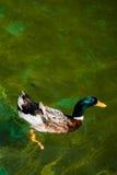 Сиротливые жизни птицы в окружающей среде Стоковые Изображения