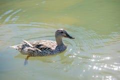Сиротливые жизни птицы Стоковая Фотография RF