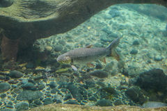 Сиротливые заплывы рыб около морского дна стоковые фотографии rf