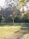 Сиротливые листья Стоковая Фотография RF
