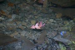 Сиротливые лист Стоковая Фотография RF