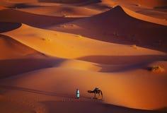 Сиротливые человек и верблюд в пустыне Сахары стоковое фото rf