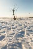 Сиротливые дюны снега дерева в поле Стоковые Фото