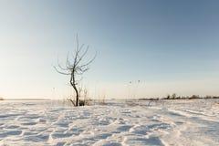 Сиротливые дюны снега дерева в поле Стоковое Изображение RF