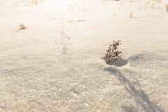 Сиротливые дюны снега дерева в поле Стоковые Фотографии RF