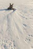 Сиротливые дюны снега дерева в поле Стоковое фото RF