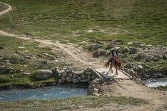 Сиротливый всадник пересекая малый деревянный мост Стоковые Фото