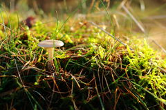 сиротливый гриб Стоковое Изображение