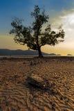 Сиротливый дерева на тропическом пляже во время захода солнца - Длинное exposur Стоковое Изображение