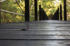 Сиротливый лес Стоковое Фото