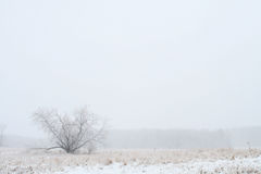 Сиротливый и холодный Стоковое Изображение RF