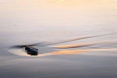 Сиротливый камень на песке стоковое изображение rf