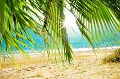 Сиротливый карибский пляж Стоковые Изображения RF