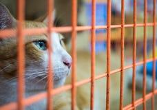 Сиротливый кот в клетке Стоковое Изображение
