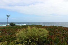 Сиротливый куст дерева и травы на атлантическом побережье Стоковая Фотография