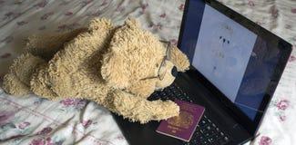 Сиротливый медведь ища влюбленность на интернете Стоковое фото RF