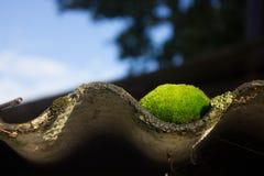 Сиротливый мох на крыше стоковая фотография rf