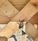 Сиротливый путайте пчела Стоковая Фотография