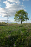 сиротливый дуб стоковые фото