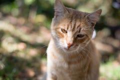 Сиротливый, унылый красный кот стоковое изображение rf