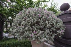 Сиротливый цветок Стоковое Фото
