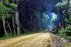 Сиротливый человек на дороге леса, ландшафте ночи Стоковые Изображения