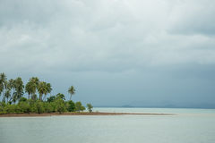 Сиротливый Palm Beach Стоковые Фото