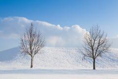 2 сиротливых дерева в ландшафте зимы Стоковые Изображения