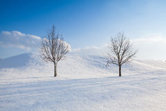 2 сиротливых дерева в ландшафте зимы Стоковое Изображение RF