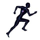система васкулярная Стоковое Изображение