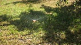 Система водообеспечения распыляет воду на лужайке зеленая лужайка в парке, в саде намоченном в утре с водой Небольшой акции видеоматериалы