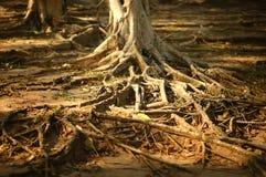Система корня над землей Стоковая Фотография RF