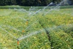 Система Irrigational на промышленном поле картошки Стоковое фото RF