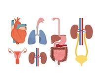 Системы человеческого тела красочного силуэта установленные бесплатная иллюстрация