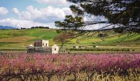 Сицилийская роща миндалины Стоковое Изображение