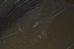 Сияющая сеть паука над темным, пакостным озером Стоковое Фото