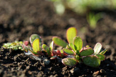 Сияющая трава на том основании Стоковая Фотография RF