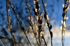 Сияющая трава Стоковые Изображения