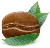Сияющее зажаренное в духовке кофейное зерно с листьями Стоковое Фото