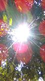 сияющее солнце под деревом Стоковые Фото