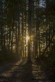 сияющее солнце в лесе Стоковое фото RF