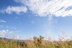 Сияющее солнце на голубом небе Стоковое фото RF