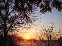 Сияющие иглы сосен и красивого сельского ландшафта Стоковое Изображение RF