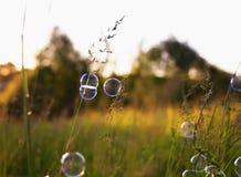 Сияющие мерцающие пузыри мыла висят на траве на зеленом summe Стоковые Изображения